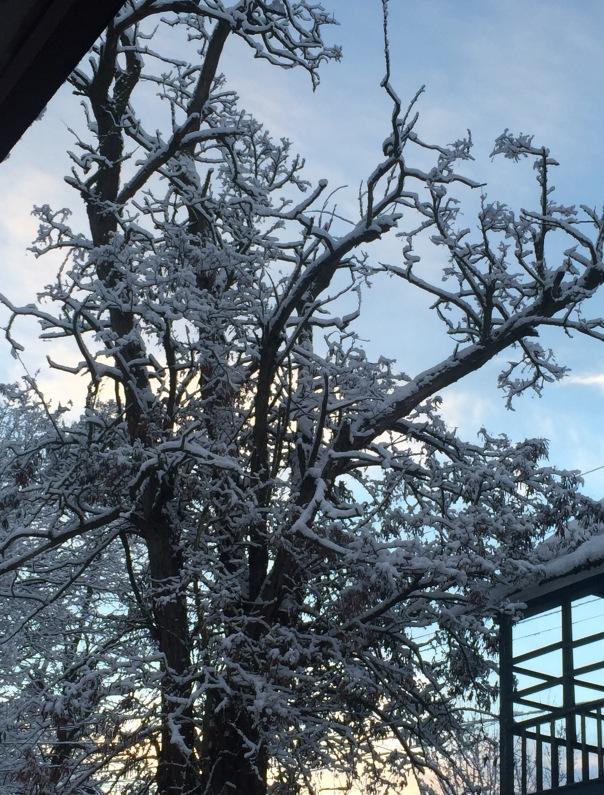 snow pic tree